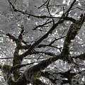 Shadow Moss by Charlaina Swinney
