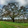 Shadow Of Great Oak by Stan Angel