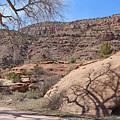 Shadow Tree Dominguez-escalante Canyon Colorado by Dale Jackson