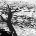 Shadow Tree  Herrick Lake  Naperville Illinois by Michael Bessler
