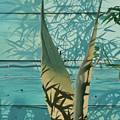 Shadowed Agave by Michael Earney