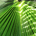 Shadows And Light On The Palm Frond by D Hackett