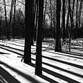 Shadows And Tracks by Debbie Oppermann