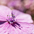 Shadows In Pink by Raelene Goddard