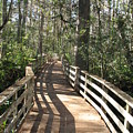 Shadows On A Boardwalk Through The Swamp by Christiane Schulze Art And Photography