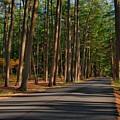 Shadows Road - Ocean County Park by Angie Tirado
