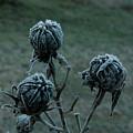 Shadowy Frozen Pods From The Darkside by Douglas Barnett