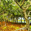 Shady Grove At Wai'anapanapa by Dominic Piperata