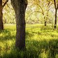 Shady Grove by John Anderson