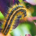 Shagerpillar by Bill Tiepelman