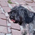 Shaggy Pup Abstract by Linda Brody