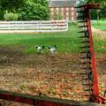 Shaker Chickens by Sam Davis Johnson