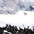 Shaker Horse In Winter by Sam Davis Johnson