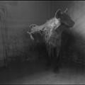 Shamed Beast by Mina Milad
