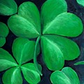 Shamrocks by Nancy Mueller