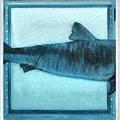 Shark In Magic Cubes - 2 Of 3 by Leonardo Digenio