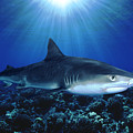 Shark In The Dark by Dave Fleetham - Printscapes