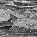 Shark by Randy J Heath