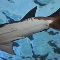Shark Tail by Paulette Thomas