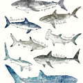 Sharks by Amy Hamilton