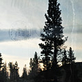 Shasta Trinity National Forest Sunrise Portrait by Kyle Hanson
