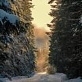 Shawnigan Winter Road by Barry Reid