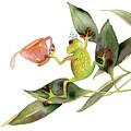 She Frog by Amy Kirkpatrick