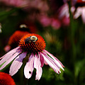 She Loves Bee She Loves Bee Not by Clayton Bruster