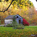Shed In Autumn by Renee Summers