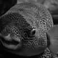 Shedd Aquarium by Kyle Hanson