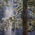 Shedding Snow by Belinda Greb