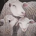 Sheep Ahoy by Rita Niblock