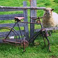 Sheep And Bicycle by Seon-Jeong Kim
