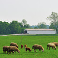 Sheep And Covered Bridge by David Arment
