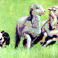 Sheep And Dog by Steve Gamba