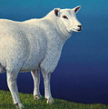Sheep at the edge by James W Johnson