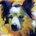 Sheep Dog by Steve Gamba