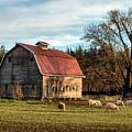 Sheep Farm by Jim Romo