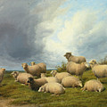 Sheep In A Pasture by Thomas Sidney Cooper
