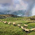 Sheep In Carphatian Mountains by Daliana Pacuraru