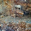Sheep by Jouko Lehto