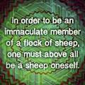 Sheep by Marko Sabotin