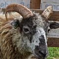 Sheep One by Mark Hunter