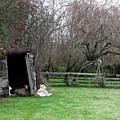 Sheep Shed by Lorraine Devon Wilke