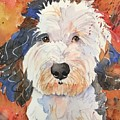 Sheepadoodle by Jackie Calderone