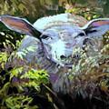 Sheepish by Brian Simons