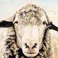 Sheepish by Wyn Ericson