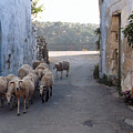 Sheeps Of Crete by Jouko Lehto