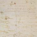 Sheet Of Studies Of Foot Soldiers And Horsemen In Combat, And Halbards by Leonardo Da Vinci