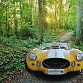 Shelby Ac Cobra In The Woods by Nancy Aurand-Humpf